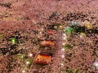 今年のお花見はどこへ行く?ライトアップも楽しめる「高輪 桜まつり2018」