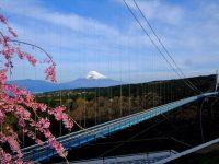 SNSでシェアしたい人気ナンバーワンは富士山!桜と富士山をスカイウォークから眺める「ザ・日本の旅」