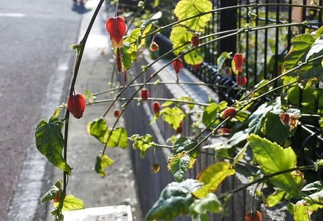 春の東京散歩で見かける花9選