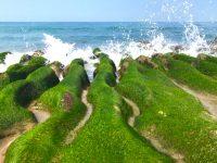 台湾北海岸の春限定!フォトジェニックな緑色の海岸線