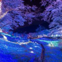 今週どこ行く?東京都内近郊おすすめイベント【3月29日〜4月4日】無料あり