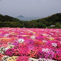 日本の島特集 福岡が誇る花の都!アクセス良好海沿いの花畑が美しい能古島