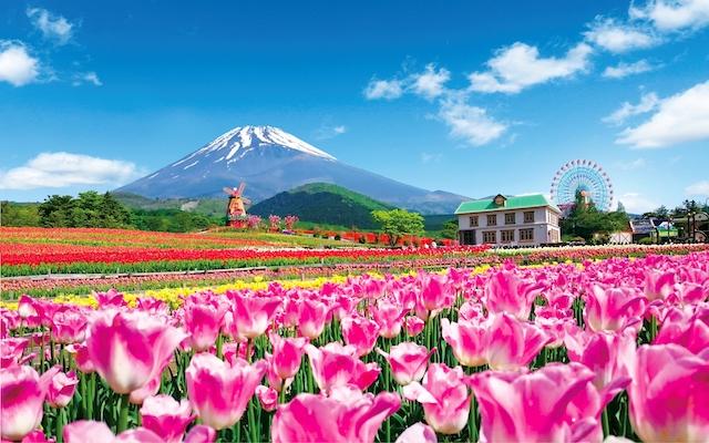 富士山とチューリップの絶景!「2018天空のチューリップ祭り」グルメ屋台も