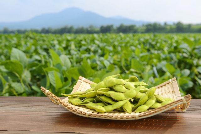 【ちょっと面白い都道府県ランキング特集】美味しさに自信あり!グルメ県トップ3の「自慢の郷土料理」とは