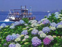 県内最大級!島内に2万株のあじさいが咲き乱れる「第18回八景島あじさい祭」