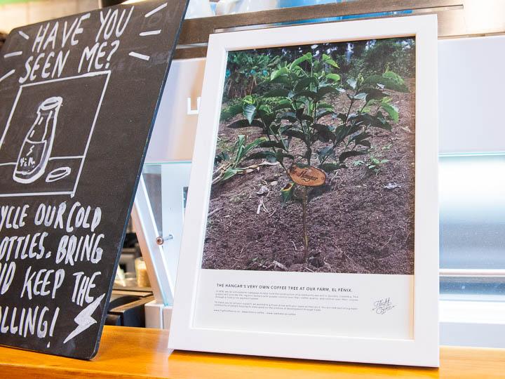 ハートと体に嬉しい!最新ニュージーランドのカフェレストラン事情。
