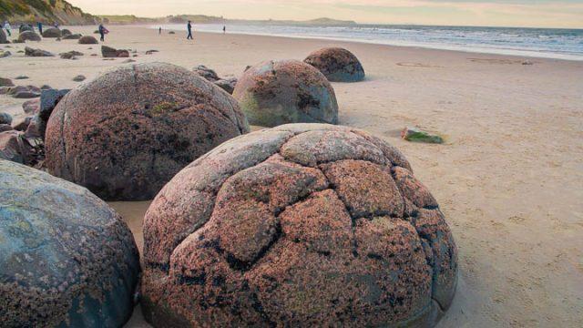 不思議な丸い石の秘密と孤高のペンギン!オットセイにアホウドリも。NZの大自然満喫。