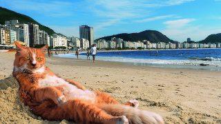 世界中の味あるネコに癒される夏。写真展「岩合光昭の世界のネコ歩き2」