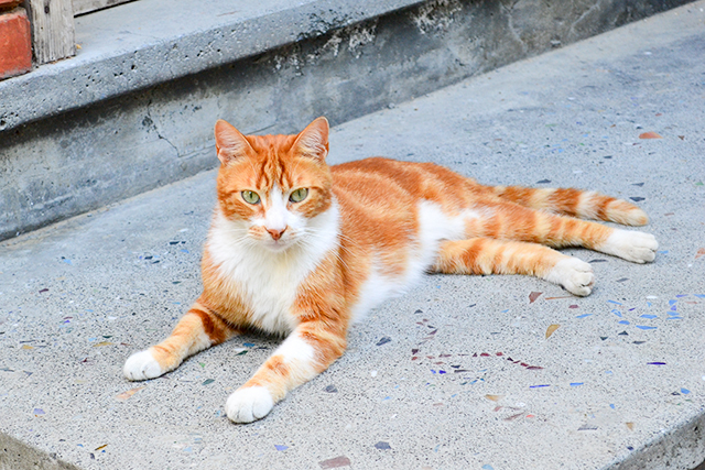 歩けば猫に当たる?トルコはいたるところに猫がいっぱいの猫の国