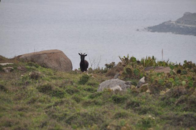 意外と知られていない?旅行者が出会うかも知れない台湾の野生動物たち