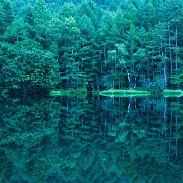 「緑響く」池に迷いこむ|たったひとつを叶える旅<11>