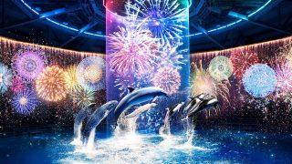 壮大なドルフィンパフォーマンスが夏バージョンに!【マクセル アクアパーク品川】