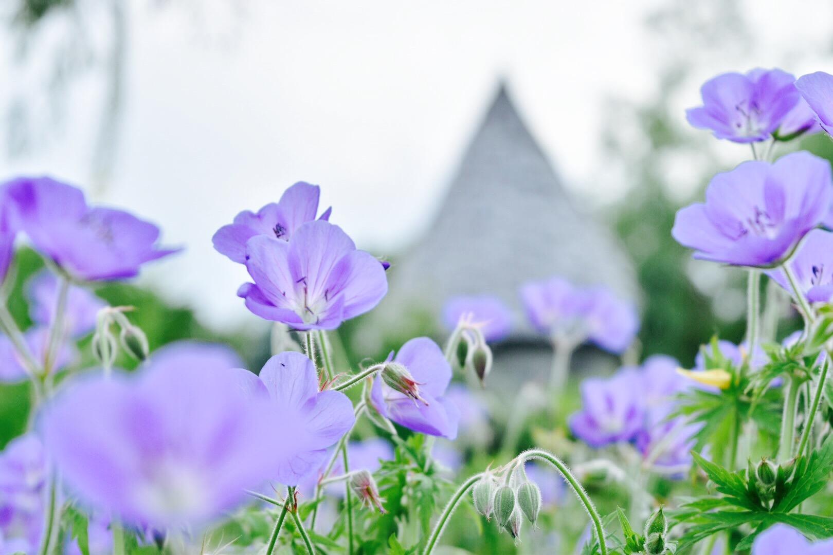 米農家が英国式庭園に!北海道を代表するガーデン【上野ファーム】