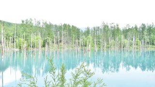 一躍世界的な観光地に!【北海道の美瑛】白金青い池はお手軽な観光スポット