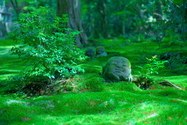 火照った身体を癒す 涼感を誘う京都のスポット5選