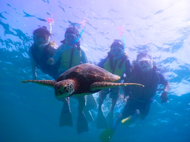 宮古島でウミガメと泳ぐ!ウミガメツアーの選び方とおすすめツアー 【宮古島旅行記20】