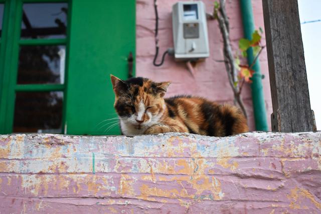 【夢の仕事】ギリシャの美しい島で猫と暮らせる求人が!