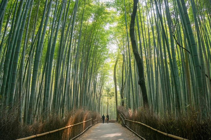トラベルライター22人が選ぶ、おすすめ観光地ランキング【京都編】