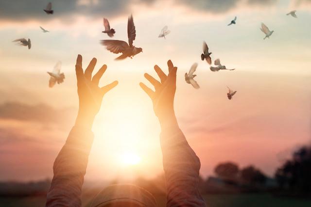 9月21日は国際平和デー、平和について考えてみませんか ...