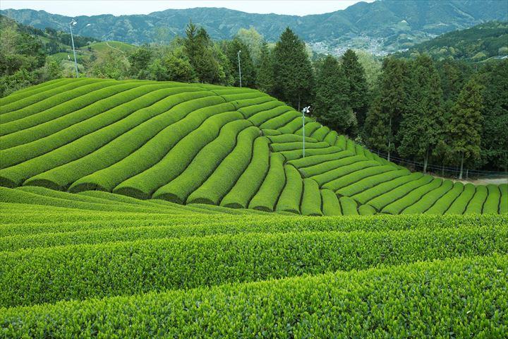 どんな味?茶畑をイメージした抹茶づくしのモンブランが登場【茶の木 by FUKUJUEN】
