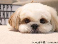 """11月1日は""""ワンワンワン""""の犬の日!可愛いワンコたちの写真がいっぱいの「いぬ休み展」"""