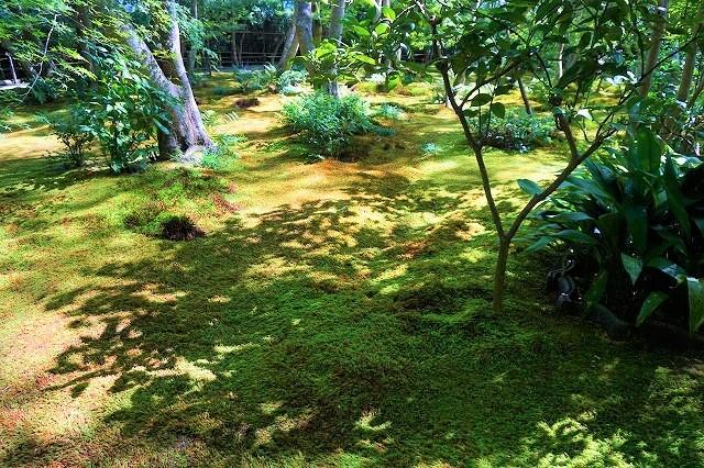 【京都嵐山】モフモフ感がたまらない、祇王寺の苔ワールドにようこそ