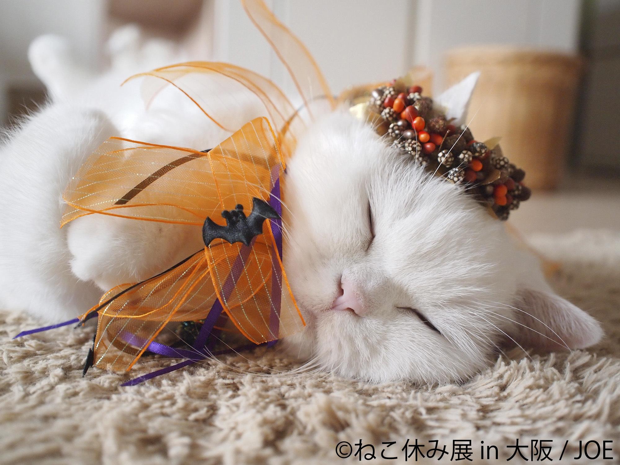 ハロウィン猫も新登場!「ねこ休み展」が大阪で開催 ガンバ大阪とのコラボも