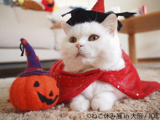 ハロウィン猫も登場!「ねこ休み展」が大阪で開催 ガンバ大阪とのコラボも