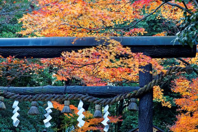 京都嵐山 野宮神社 黒木鳥居