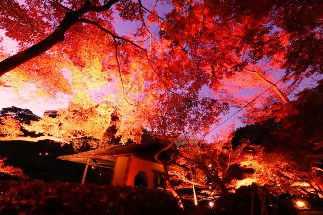 【白金台】TOKYO RED GARDEN AUTUMN FESTIVAL 粋2018