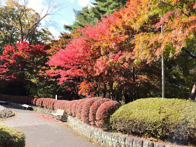 鬼怒川公園 紅葉とベンチ