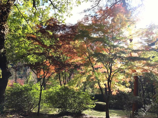 鬼怒川公園 木漏れ日