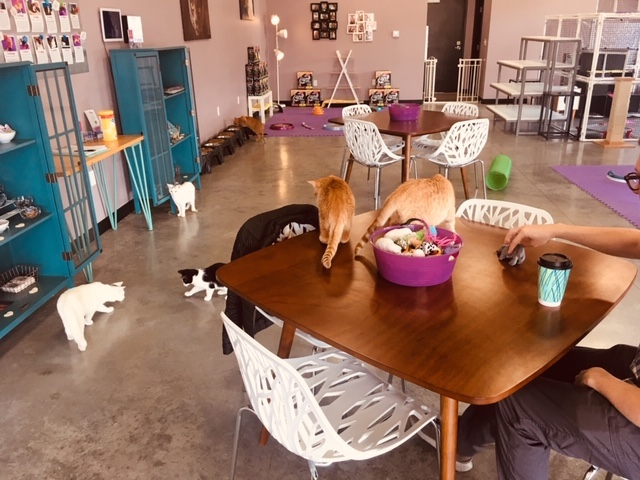 アメリカ 猫カフェ店内