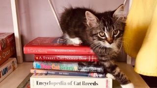 アメリカ 猫カフェの猫