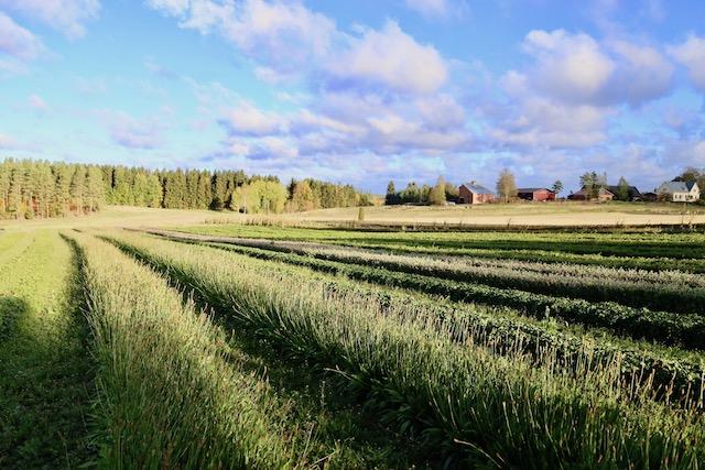 フィンランド フランシラ・オーガニックハーブ農園