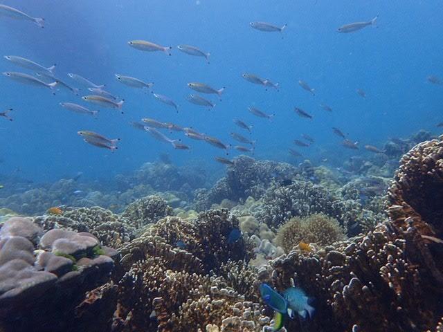タイ「リペ島」マリンアクティビティ