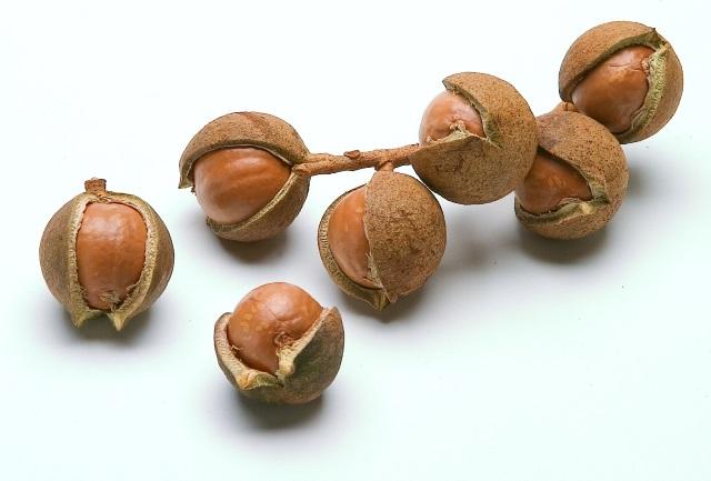 乾燥させたマカデミアナッツの実