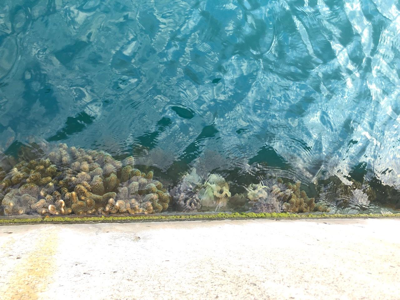 久高島 港のサンゴ