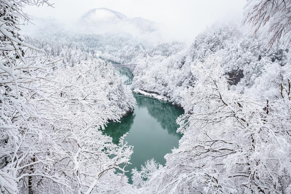 粉雪がちらついているよう!冬の到来を告げる「雪虫」とは?