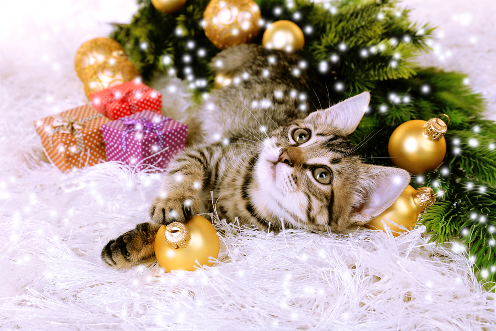 クリスマスツリーを見上げる猫
