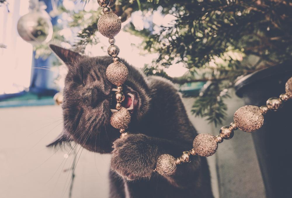 クリスマスツリーのオーナメントが気になる