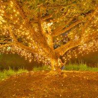 The Enchanted Garden1