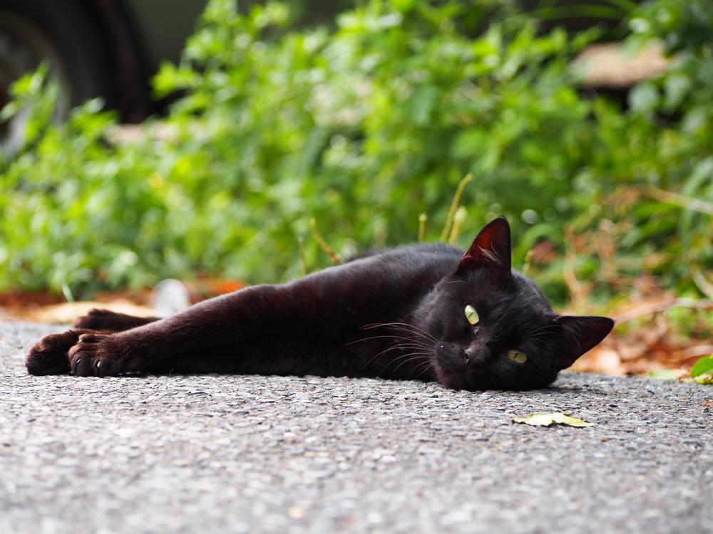 田代島の猫4