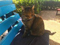インディペンデンスガーデンの猫