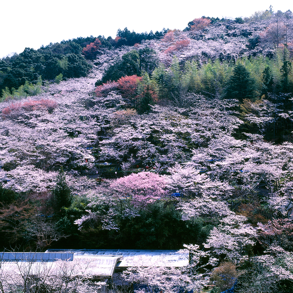 春色の絶景【第1回】|たったひとつを叶える旅<38>