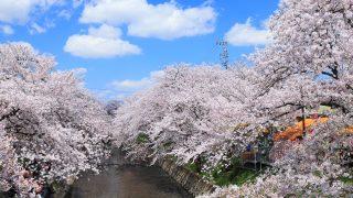 愛知県 五条川