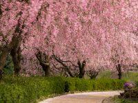 茨城県 常陸風土記の丘