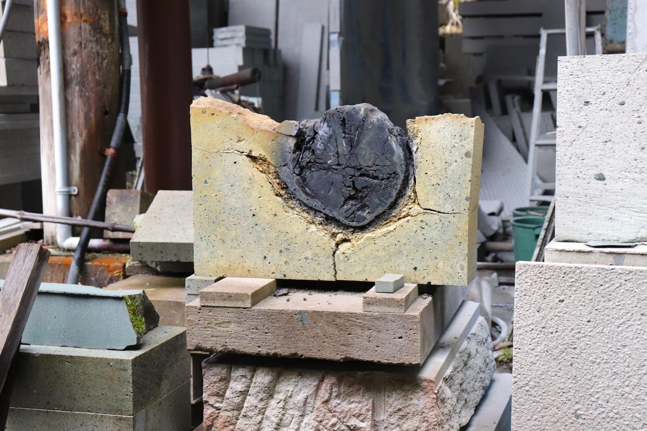 滝ヶ原石切り場の木の幹の化石