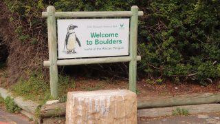 ようこそボルダーズビーチへ