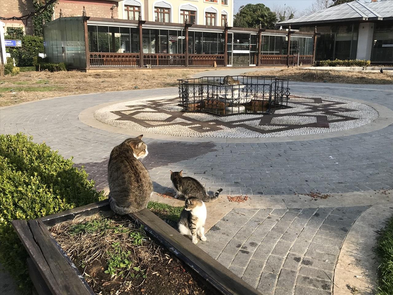 イスタンブールの街には沢山の猫が